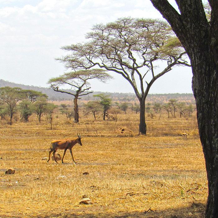africa husky bush plane trip